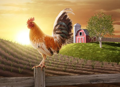 Home decorating: The lore of the rooster - OnlineFabricStore ...