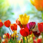 Home Decor:  5 tips for fresh spring decorating