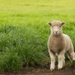 The Glories of Wool