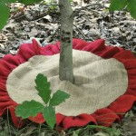 Burlap and Jute for Fall/Winter Gardening Tasks