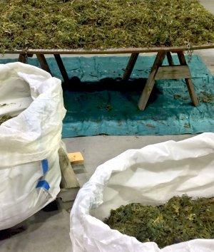 Bulk Bags for the Hemp & Marijuana Industries