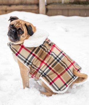 How to Make a Waterproof Dog Coat