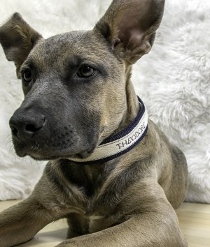 How to Make a Dog Collar